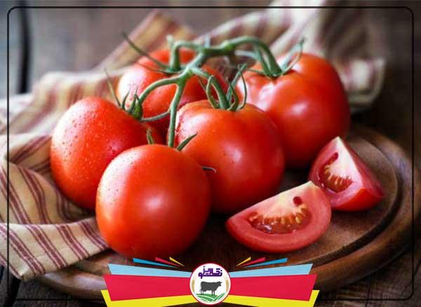 آموزش تولید گوجه فرنگی از کاشت تا برداشت