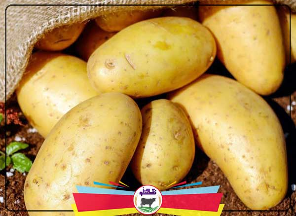 آموزش کامل کاشت سیب زمینی(صفر تا صد)